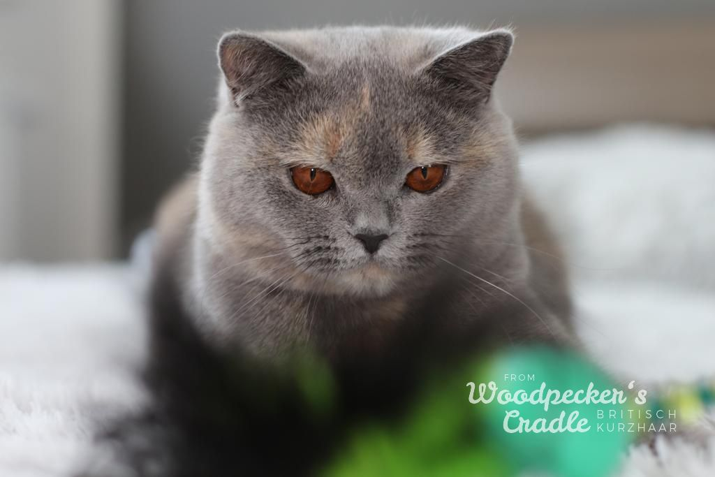 Catwomen from Woodpeckers Cradle